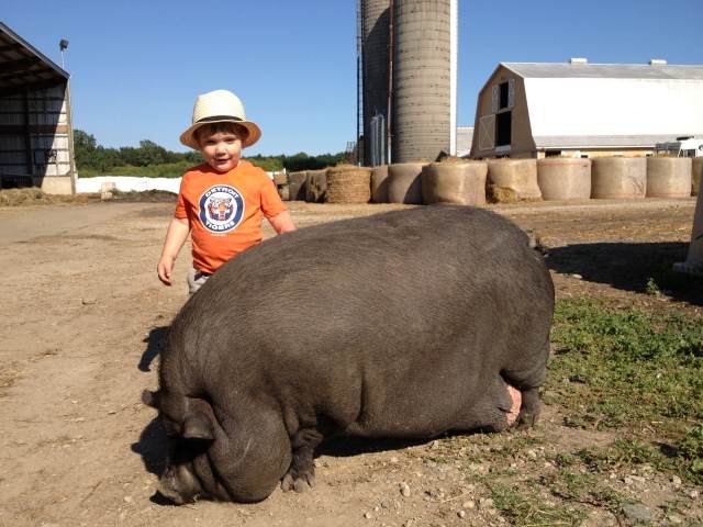 Calder pig