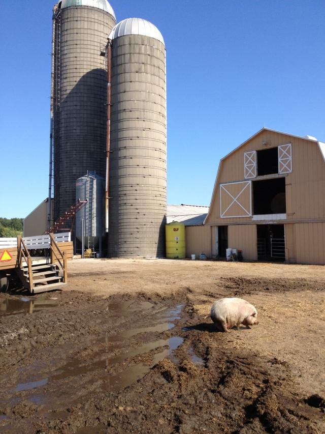 Calder Dairy Farm